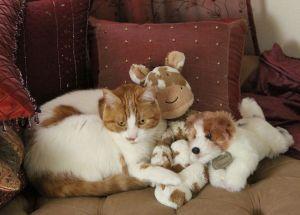 LC the Fraidy Cat