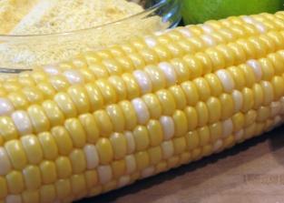 Corn Lines